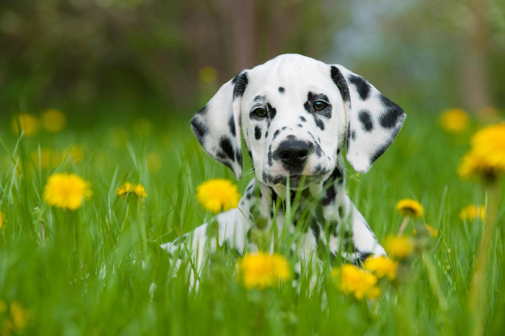 Veterinärvård för hundar