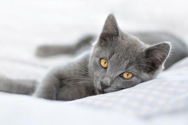 Veterinärvård för katter